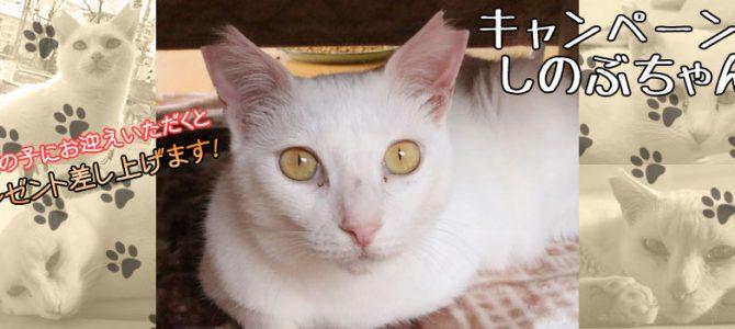 しのぶちゃん♀ 白