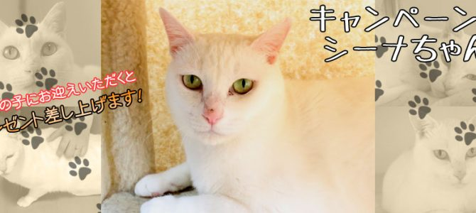 シーナちゃん♀ 白