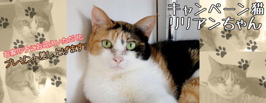 リリアンちゃん♀ 三毛