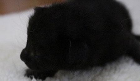 タンゴ(たぶん♂) 黒